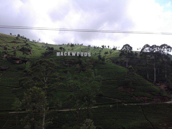 Katunayaka, Sri Lanka: mackwoods