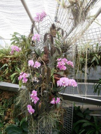 výstava orchidejí Brno