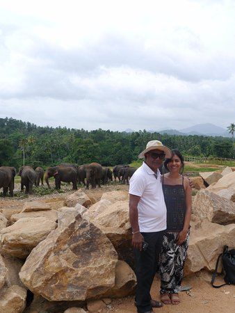 Bentota, Sri Lanka: Pinnawala Elephant Orphange