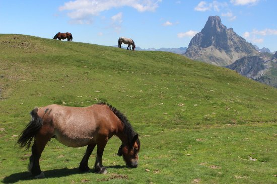 Astún, España: Caballos, ovejas, ranas, truchas, tritones... naturaleza en estado puro.