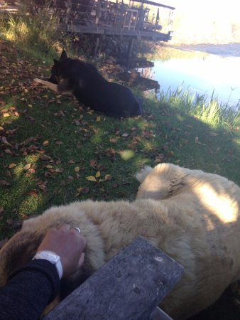Robertson, South Africa: Hanging out with the canine friends