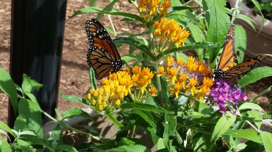 Fairbanks Museum and Planetarium : Butterfly Tent