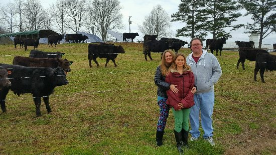 Hayesville, NC: See the cattle up close