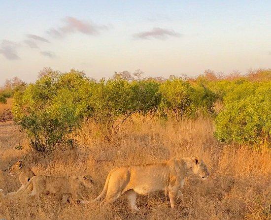 Lukimbi Safari Lodge: photo0.jpg