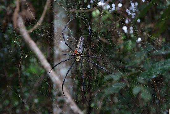 Pak Chong, Thailand: Deze spinnen zaten overal!