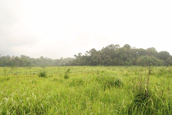 Pak Chong, Thailand: Olifanten veld