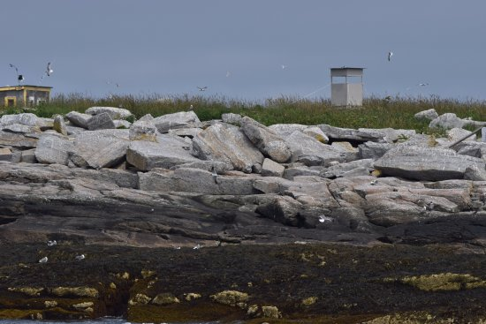 Boothbay Harbor, ME: Birds flying and on the rocks