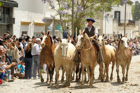 Areco Tradicion