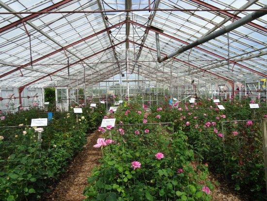 Historische Tuin Aalsmeer : Steenkool gestookte rozenkas historische tuin aalsmeer foto van