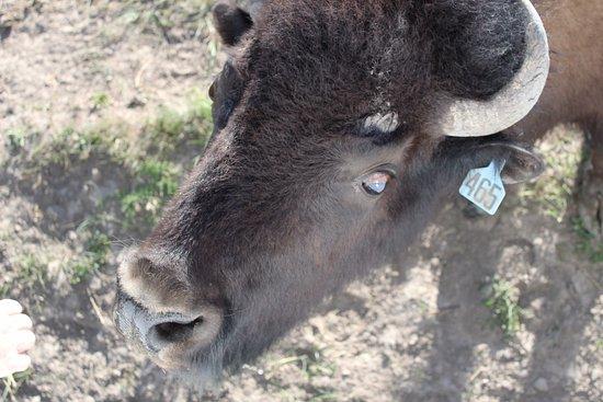 pełne podłączenie kempingów w Wyoming