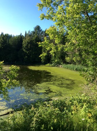 Tomifobia Nature Trail: Le marais au kilomètre 9.