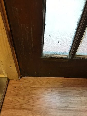 Richfield Springs, NY: More bugs by the door