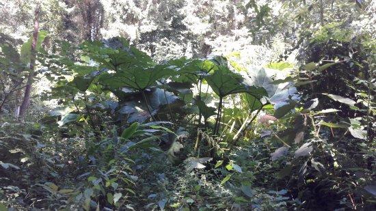 Jungle Garden Karlostachys: 20170725_150821_large.jpg