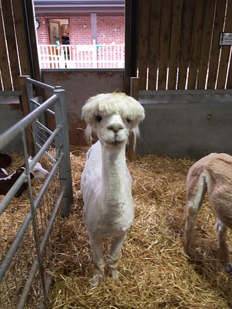 Our Day On The Farm Picture Of Wentworth Garden Centre Rotherham Tripadvisor