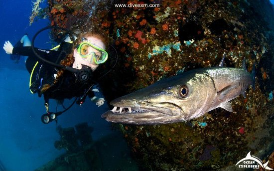 Simpson Bay, Saint-Martin / Sint Maarten: Me and George the Barracuda on a 90 ft dive :)
