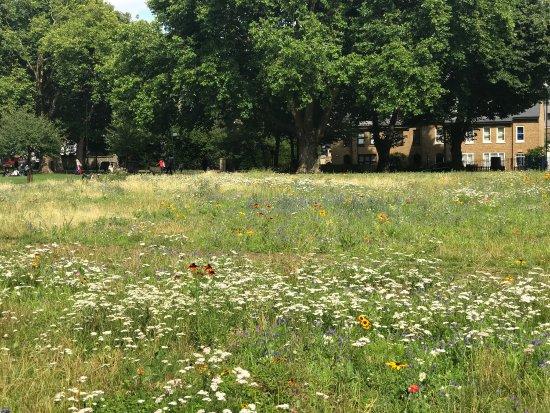 London Fields Park: photo3.jpg
