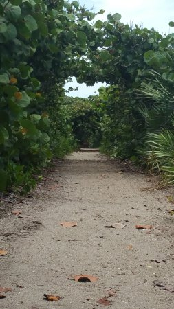 Hobe Sound, Floryda: Lots of trails, it is a state park