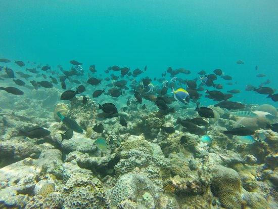 Thulusdhoo Island: Lot of Dive spots within 15 - 40 minutes distance