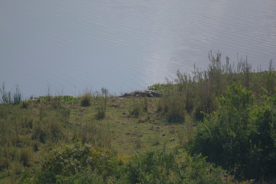 Malelane, Güney Afrika: Crocodile aan de oever van de Crocodile River.