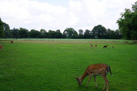 Havixbeck, Niemcy: reindeer