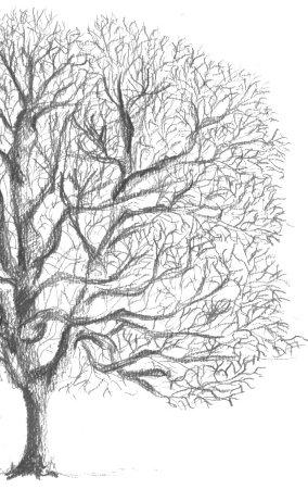 J 39 apprends dessiner les arbres l 39 hiver photo de - Dessiner un paysage d hiver ...