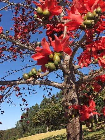 Blue Tree Park Lins: árvores bem cuidadas