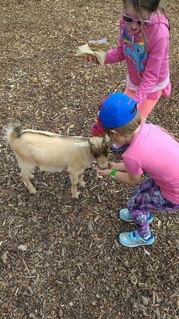 Louth, UK: Feeding the baby goat!