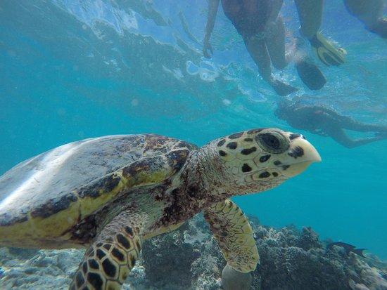Maafushi Island: ...