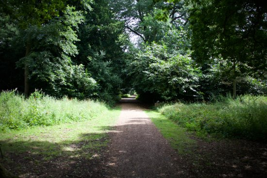 Eye, UK: Stable and flat paths amongst forest routes