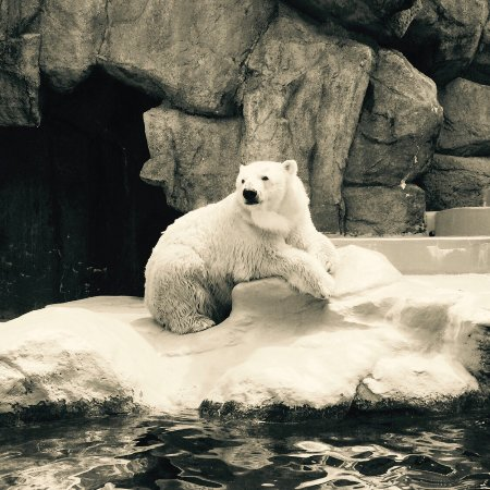 静冈市立日本平动物园