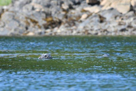 Southeast Exposure Outdoor Adventure Center: Harbour Seal
