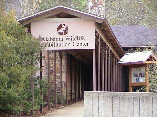 Pelham, AL: Walkway to our front door
