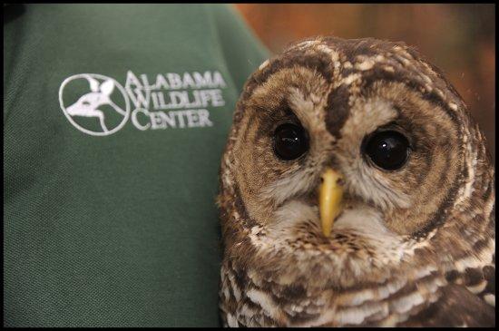 Pelham, AL: Education bird at work