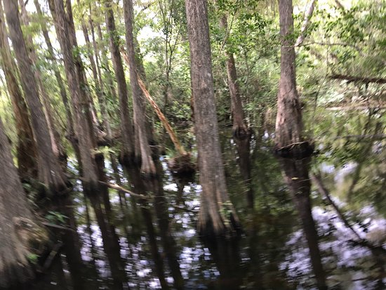 southwest florida's wetland wilderness big cypress Find great deals for florida sand dollar bks: southwest florida's wetland wilderness : big cypress swamp and the ten thousand islands by jeff ripple (1996, paperback.