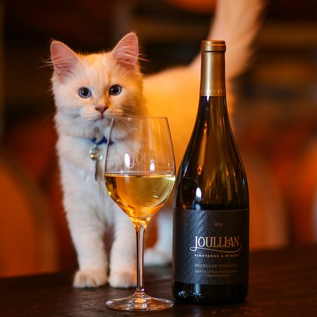 Carmel Valley, CA: Winston (the kitten) thinks our wine is purrrfect