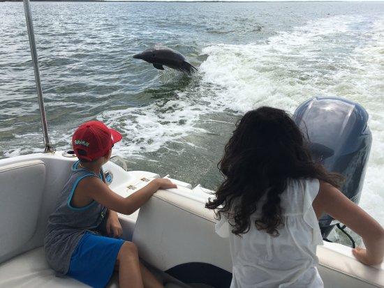 Dreamlander Tours: Dolphin!