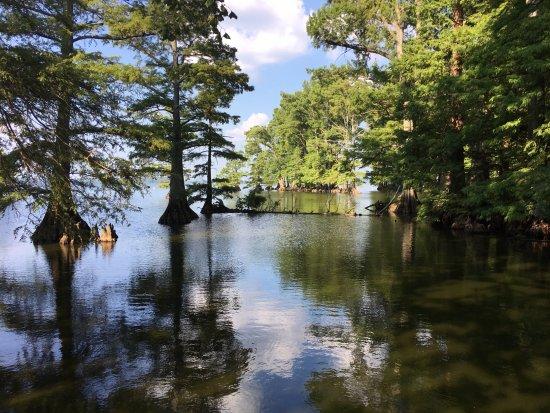 Tiptonville, TN: From near Boyette's