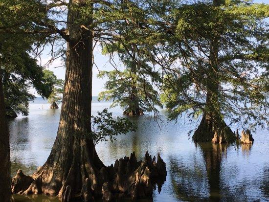 Tiptonville, TN: Near Boyettes