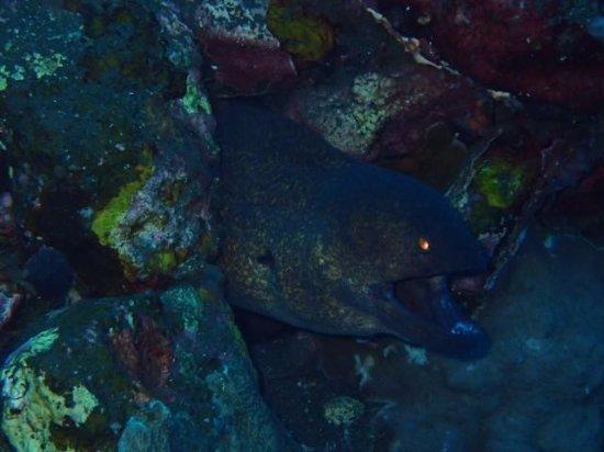 Tulamben, Indonesia: Moray eel keeping an eye on us
