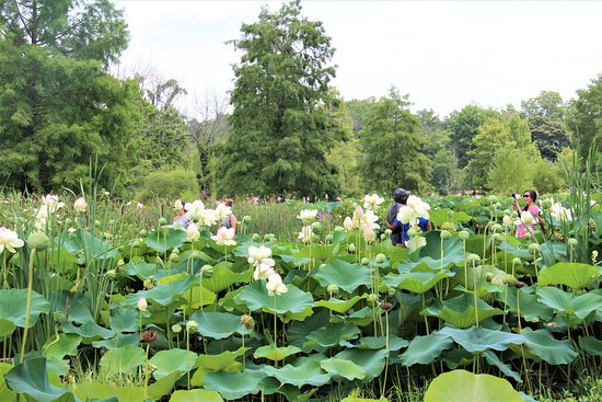 Kenilworth Park And Aquatic Gardens Washington Dc Top Tips Before You Go With 144 Photos