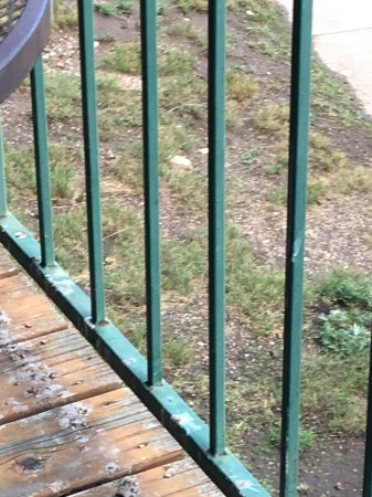 Inn at Silver Creek: Rotting deck with bird droppings