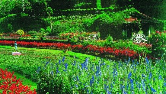 Taj Savoy Hotel, Ooty: Savoy Hotel Sightseeing - Botanical Gardens