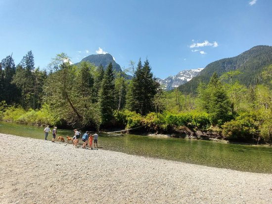 Maple Ridge, Canadá: A family with their dogs playing by the river