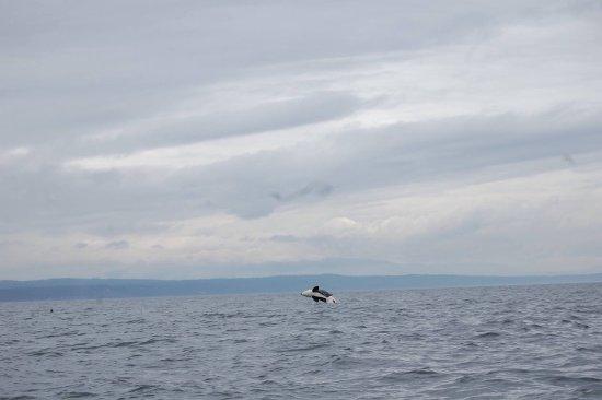 Cowichan Bay, Canada: photo7.jpg