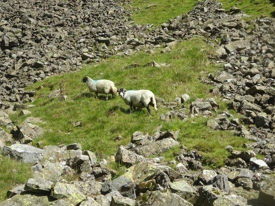 Cumbria 이미지
