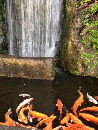 Nobeoka, Japón: 城山公園下にある市役所前の錦鯉