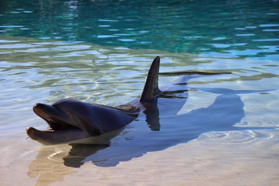 Main Beach, Australia: dauphin