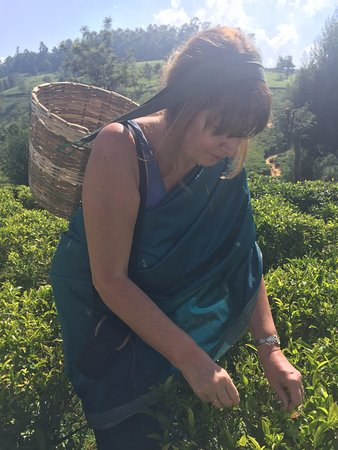 Heritance Tea Factory: Tea Picking