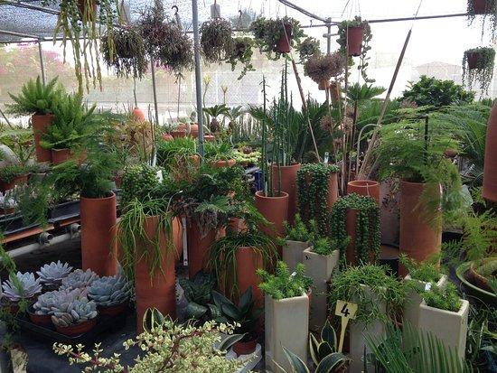 Fotos de n jar im genes destacadas de n jar provincia for Vivero de cactus