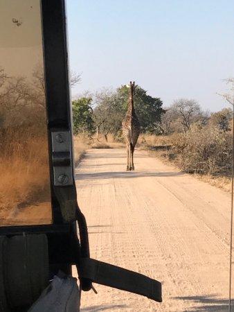 Parque Nacional Kruger, Sudáfrica: photo1.jpg